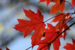 Autumn morning 10-20-12 030