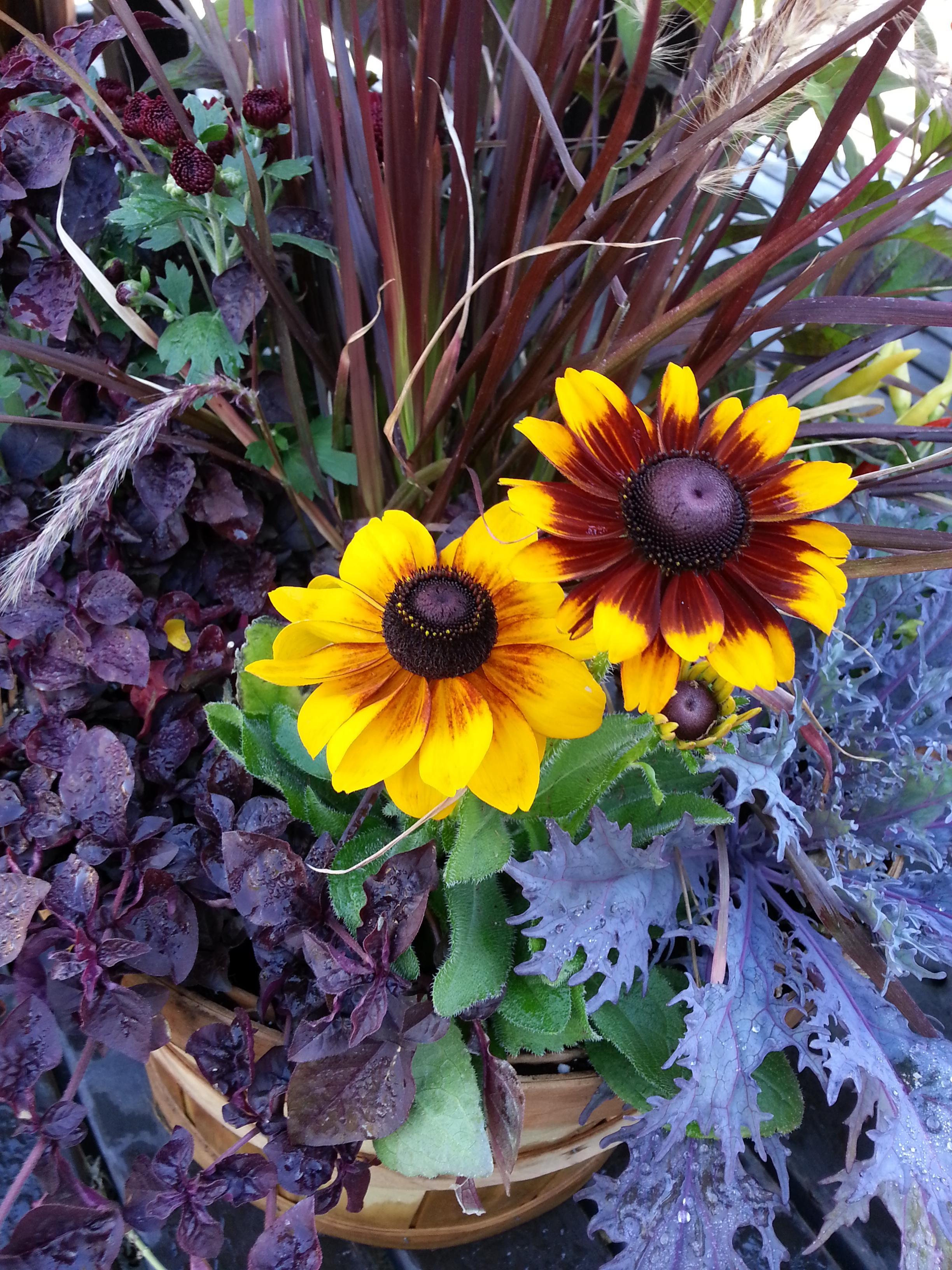 Fall Flowers 9-30-13