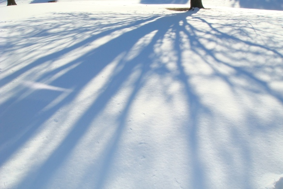 Tree Branch Shadows In The Snow 2-11-11
