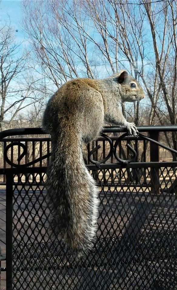 Slider Squirrel