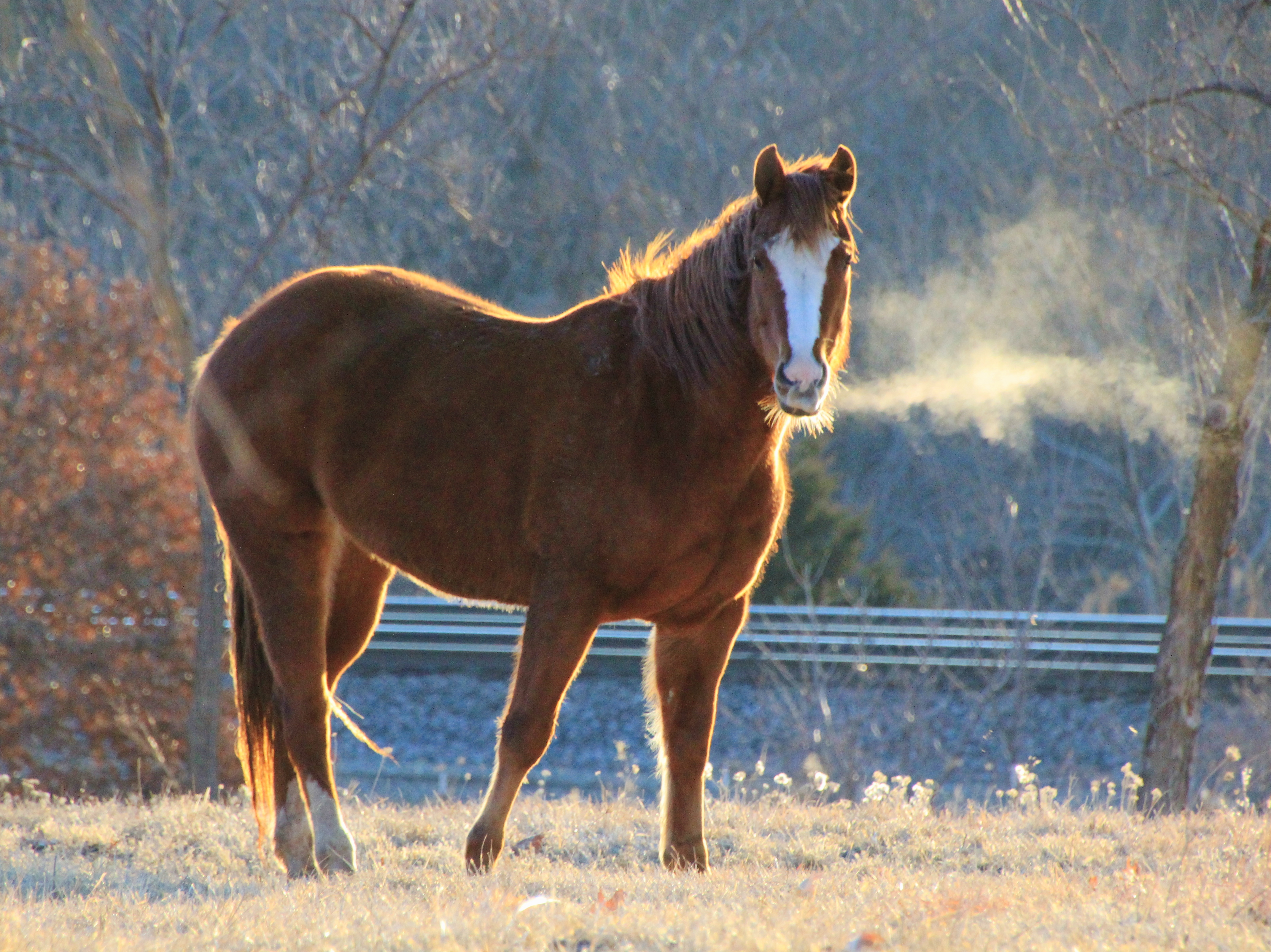 Sunlit Horse 2-26-15 006