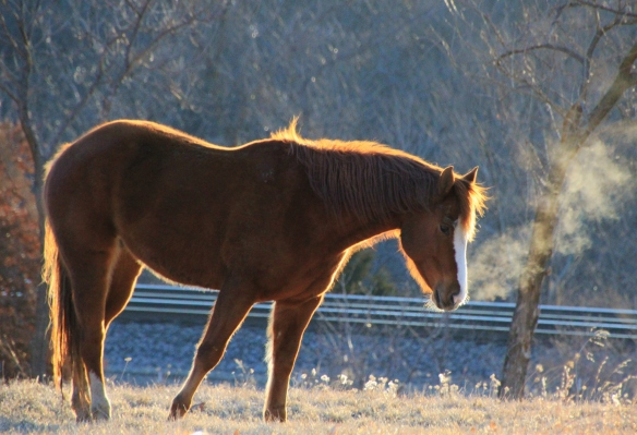 Sunlit Horse 2-26-15 011