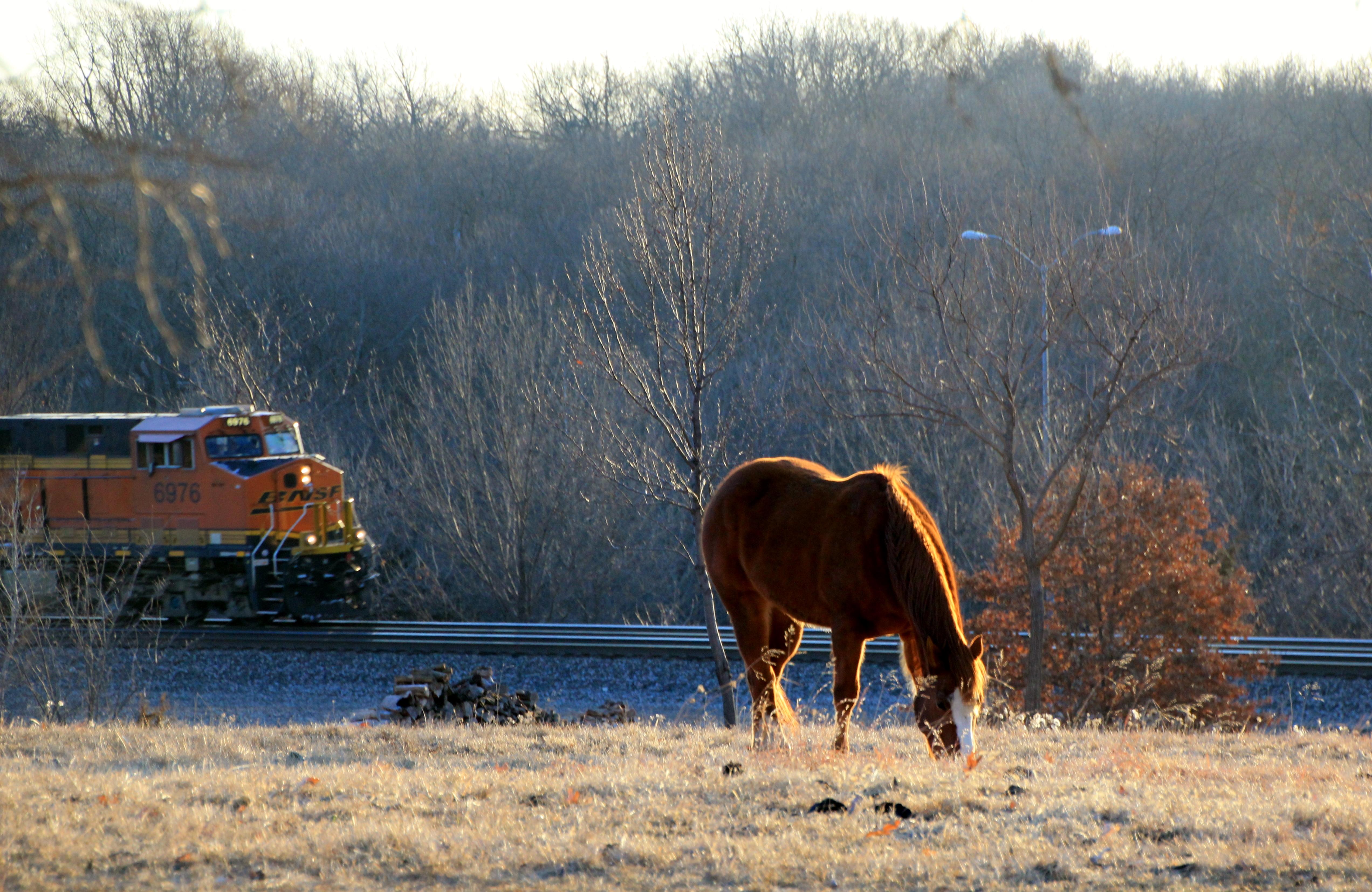 Sunlit Horse 2-26-15 014